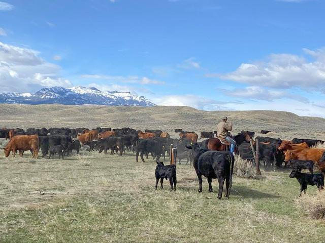 Keep working through the current difficulties. There are some signs of returning to normal, and we need to continue to work through the backlog of processing cattle. (DTN photo by ShayLe Stewart)