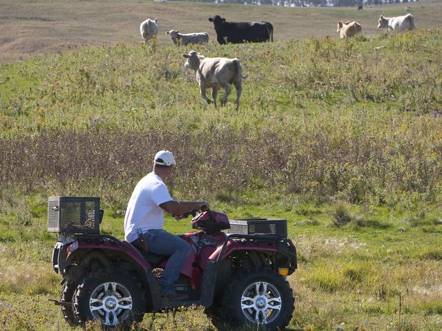 A farmer uses an all-terrain vehicle (ATV) to check his grazing cattle. (DTN file photo)