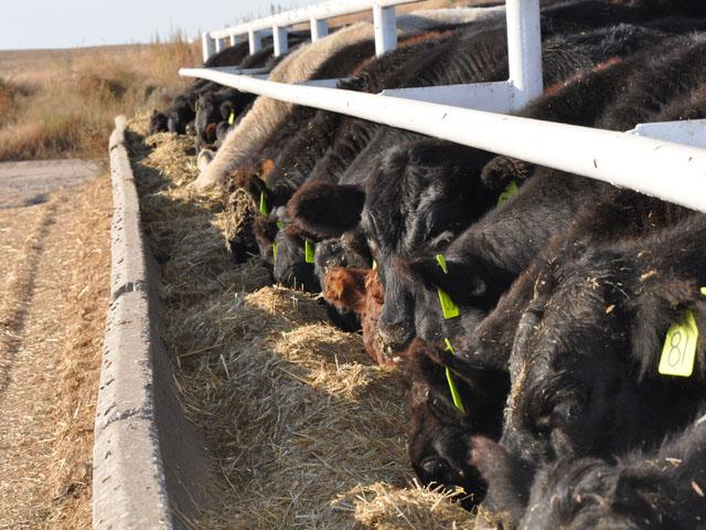 Looking past Labor Day raises some questions in the cattle industry. (DTN photo by Katie Micik)