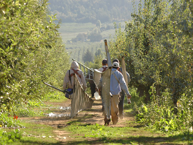Laborers head to work in a California orchard. (DTN file photo by Jim Patrico)