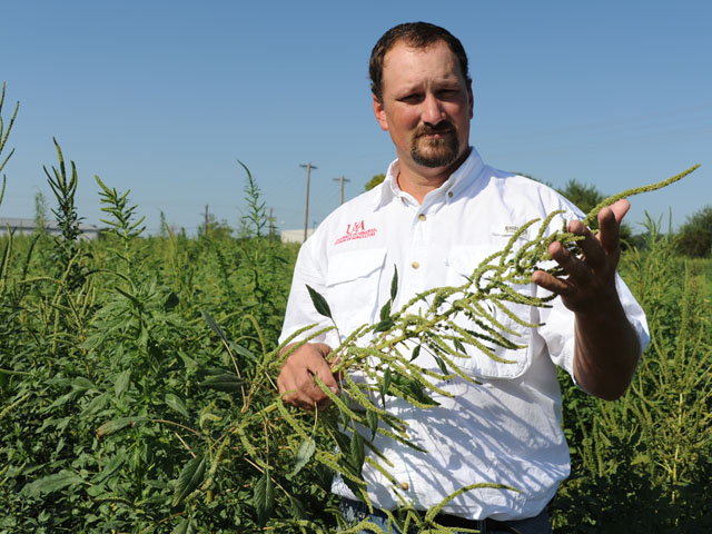 Palmer amaranth isn't just a southern problem. Jason Norsworthy, University of Arkansas weed scientist, found this field of pigweed in Illinois. (DTN photo by Pamela Smith)