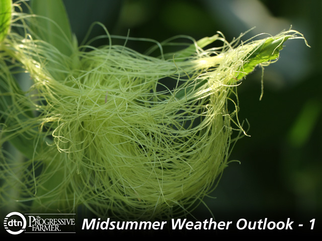 Weather conditions appear favorable for corn pollination during July. (DTN photo by Pam Smith)
