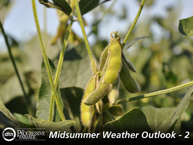 The July weather forecast offers a generally beneficial scenario for soybeans ahead of the critical pod-filling month of August. (DTN photo by Katie Micik)