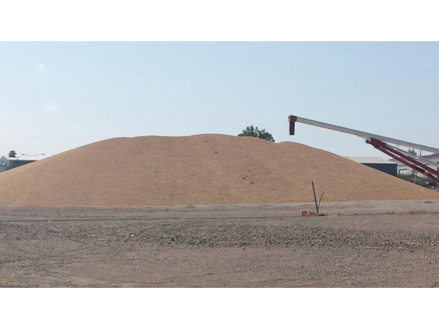 Winter wheat pile at elevator in Pierre, S.D., on Aug. 1, 2014. (Courtesy photo)