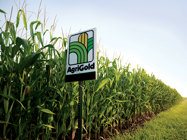 AgriGold will begin selling soybean seed in 2017 for the first time in the brand's history. (Photo courtesy of AgriGold)