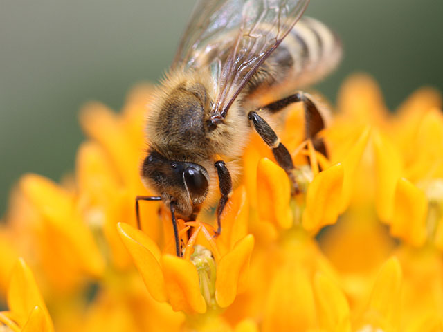 Farmers need to take another look at protecting bees and other pollinators from planter dust. (DTN photo by Pamela Smith)