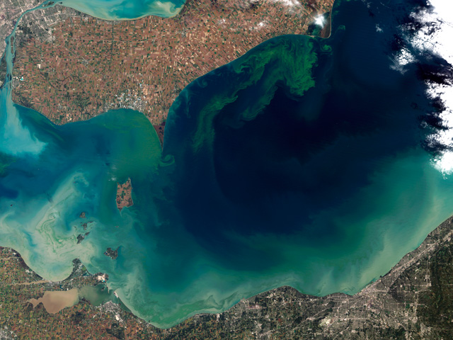A NASA satellite image of an algae bloom in Lake Erie in 2015. Vibrant green filaments extend out from the northern shore.