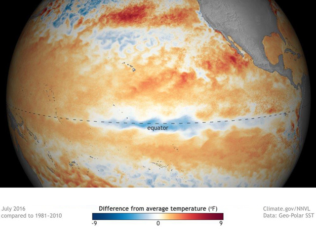 """Equator region temperatures in the Pacific Ocean show some cooling -- but not enough yet to completely identify La Nina,"" says  NOAA scientist Emily Becker. (NOAA Graphic)"