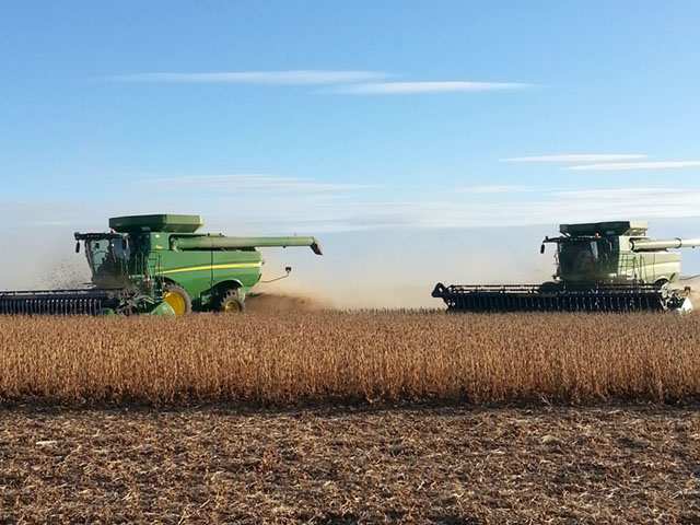 Soybean harvest is in late stages, with progress lagging in the northern and western Midwest. (DTN photo courtesy Elaine Kub)