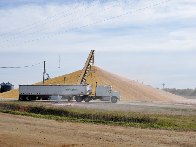 This growing corn pile is located west of MaxYield Co-op, Everly, Iowa. (Photo courtesy of Chad Meyer, MaxYield Cooperative)
