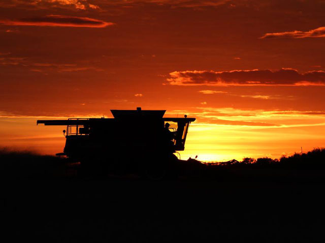 Before more unfavorable weather moved into the Canadian Prairies last week, farmers harvested often late into the night to try to get their crops into the bin, such as on this field near Alticane, Saskatchewan. (DTN photo by Elaine Shein)