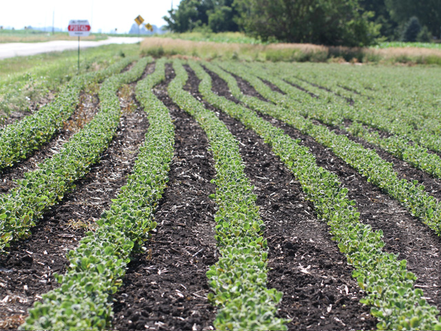 Soybeans are very sensitive to dicamba herbicide as many growers found out last year when varieties that were not tolerant to the herbicide showed injury symptoms. (DTN photo by Pamela Smith)