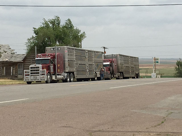 Under a bill introduced in Congress, livestock haulers could get an extra 150 miles of driving distance to deliver animals. Other perishable products would get the same leniency from hours of service rules. (DTN file photo by Mary Kennedy)