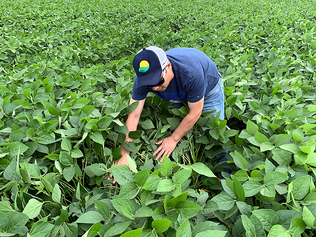Gladir Tomazelli planted his soybeans early on his farm near Campo Verde, Brazil, in the state of Mato Grosso and is expected to start harvest in late December. (DTN photo by Lin Tan)