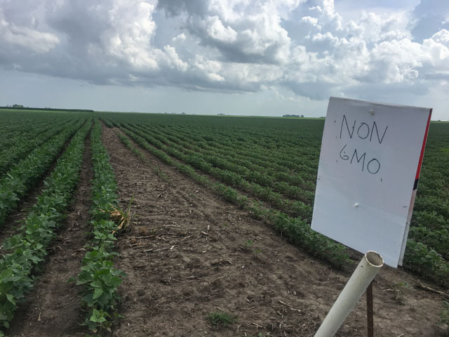 A sign of the times as some growers marked soybean fields last year hoping to alert applicators of sensitive varieties within. New studies are showing more about the characteristics of new dicamba formulations. (DTN photo by Pamela Smith)