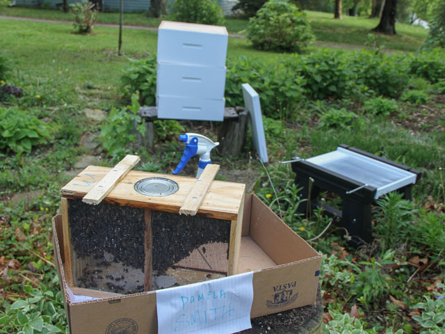 This package contains 3 pounds of honeybees and one mated queen to start one a colony. (DTN photo by Pamela Smith)