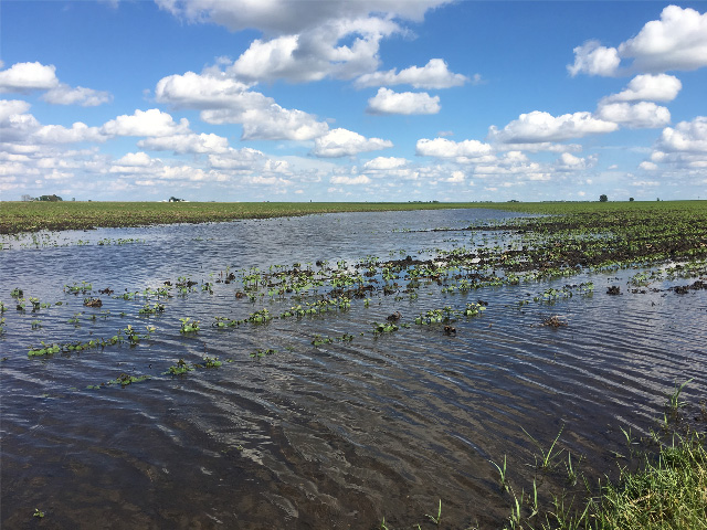 Issues in fields brought on by heavy spring rains are expected to last through the rest of the growing season. (DTN photo by Pamela Smith)