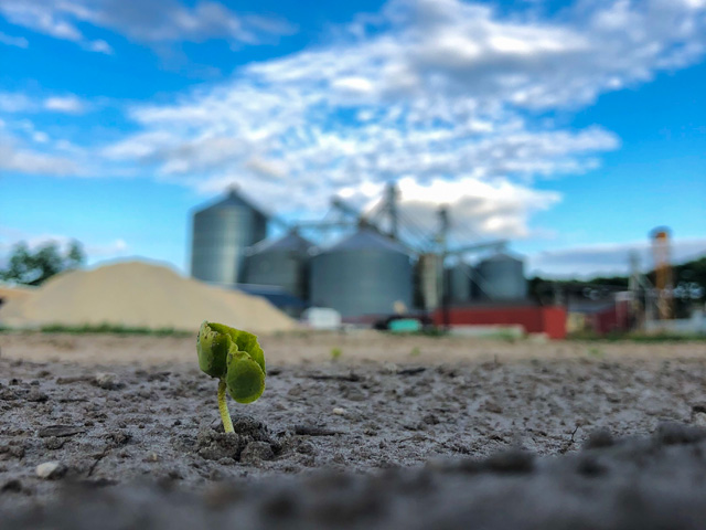 Emerging cotton seedling, by Mandy Pierce from Hertford, North Carolina, won the Editor's Pick award in this year's DTN/Progressive Farmer MyPlanting19 photo contest. (Mandy Pierce photo)