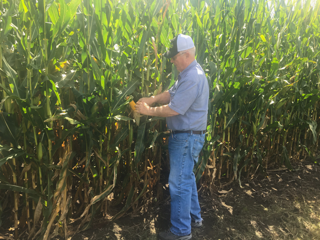 Illinois farmer John Werries checks one of his cornfields, which he expects to be ready for harvest before a hard frost, which typically occurs in late October in his region. But farther north, growers face earlier frost dates and more uncertainty about their crops. (Photo courtesy John Werries)