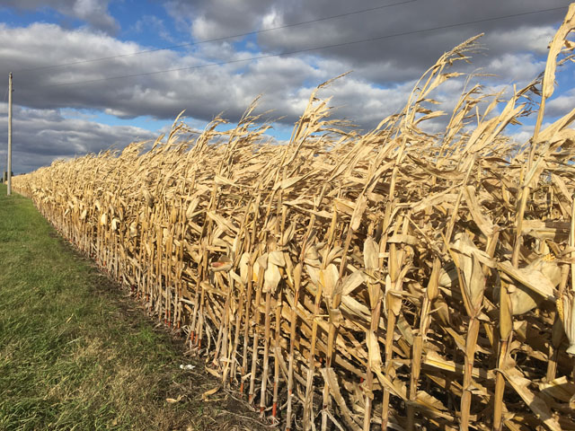 Producers with Federal Crop Insurance and standing crops can request more time to harvest, but a Dec. 10 deadline looms to qualify. (DTN photo by Pamela Smith)