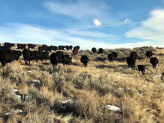 Ranchers have been going through their busiest time of the season, shipping calves, as they prepare for the long, cold winter ahead. (DTN photo by ShayLe Stewart)
