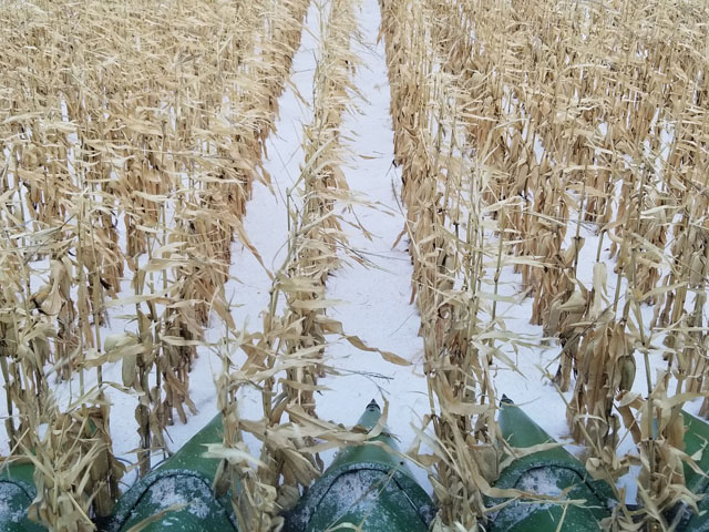 "It was a snowy harvest in North Dakota, where nearly 50% of the corn remains in some spots. ""It's been a tough year here. The door closed on some corn now, and there's a crazy amount out there yet. We had one variety at 49 lbs. per bushel; rest seemed to be 50-plus and up to 54, and we put in the bin around 20 moisture or less. Few bushels went in the low-temp drying bin. There is definitely some low test weight corn out there,"" said Mark Rohrich, Ashley, North Dakota. (Photo courtesy of Mark Rohrich)"