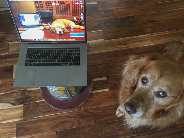 My two faithful working companions -- my dog and my computer -- are always by my side in this work-from-home environment. (DTN Photo by Pamela Smith)