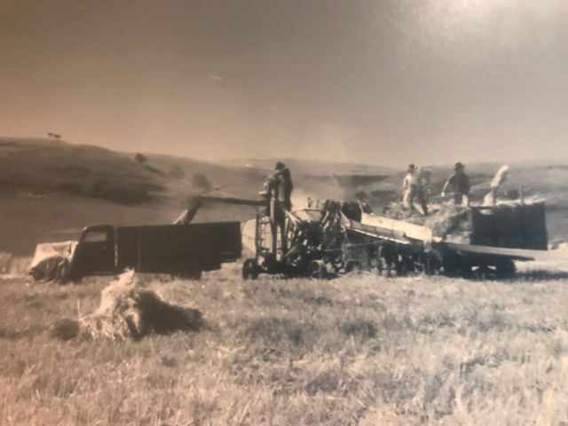 Herman Hoines bringing in grain from the field in 1938. (Picture courtesy of Karen Hoines)