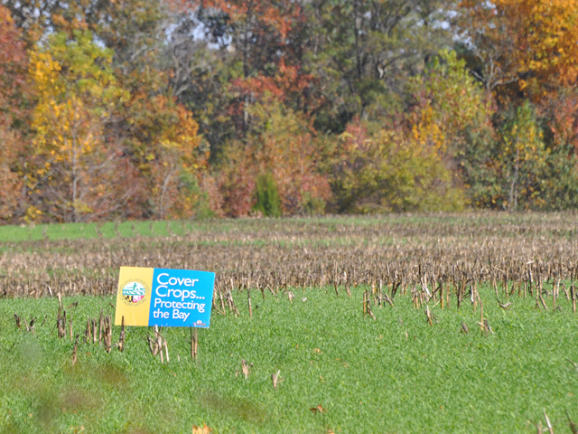 Legislation introduced Thursday by key senators would allow earlier haying and grazing of cover crops. Last year, USDA allowed early haying and grazing due to the loss of hay acres, but that was just a one-time situation. The bill would permanently move those dates earlier. (DTN file photo by Chris Clayton)
