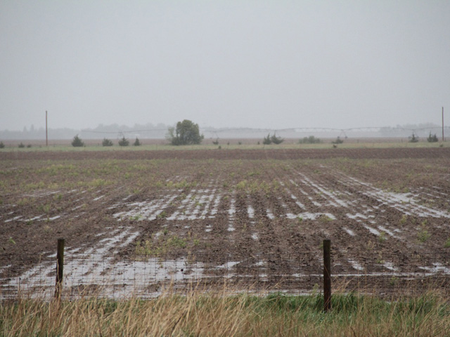 "Though climate models predicted Corn Belt regions would become hotter and drier, in the early 21th century, the climate became ""more favorable for corn production in the middle latitudes, and it has become wetter,"" Marty Hoerling, a climate scientist with the physical sciences division at NOAA, said. (DTN file photo by Elaine Shein)"