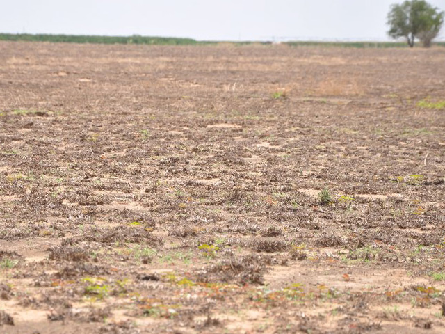 A Texas field a year after a fire, followed by drought. The pasture was unable to grow a stand. A climate study on land and food highlights the risks of extreme events on food production.  (DTN file photo by Chris Clayton)