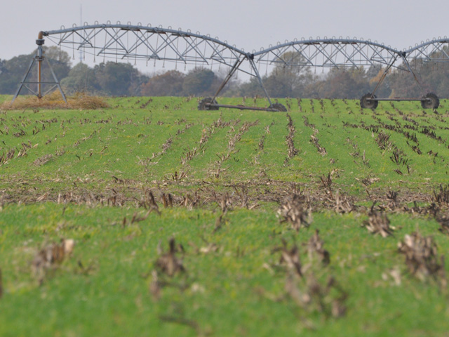 Adding cover crops to farmland helps sequester carbon and reduce ag's greenhouse gas footprint. (file photo by Chris Clayton)