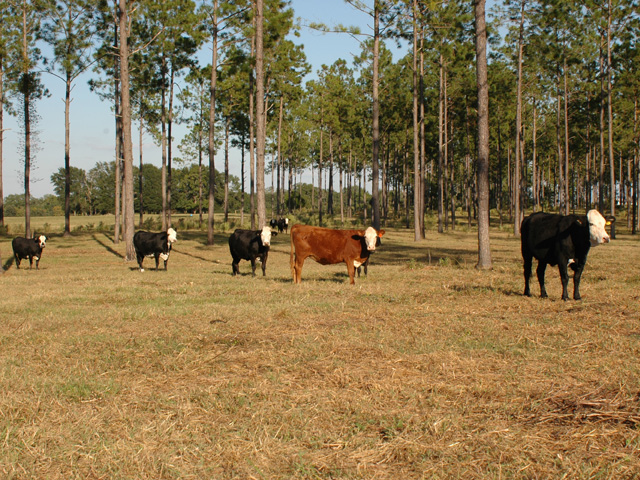 For pastures coming off last year's severe drought, some management changes will help this spring. (DTN file photo by Becky Mills)