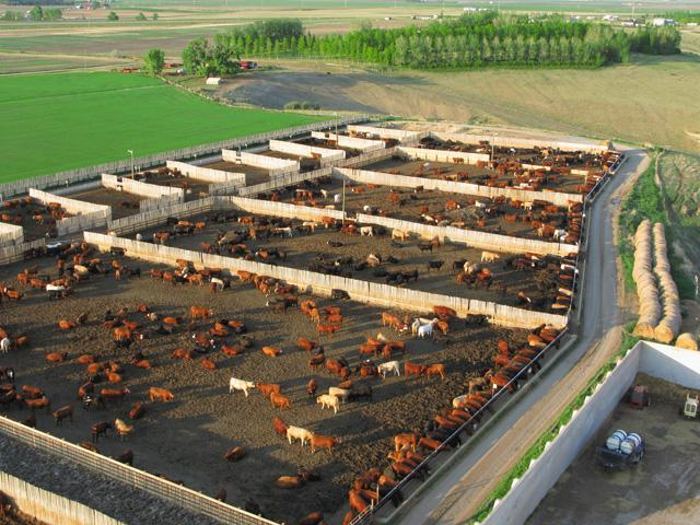 Cash cattle prices were able to pull off another week of higher money and surprisingly sold quite a few head. (DTN file photo)