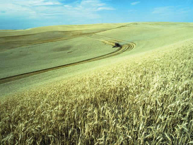 Between 2000 and 2018 Russia's ag exports increased about 16 times. Russia recently became the world's largest wheat exporter. Imagine if the country saw millions of acres more land available for agriculture. (DTN file photo)