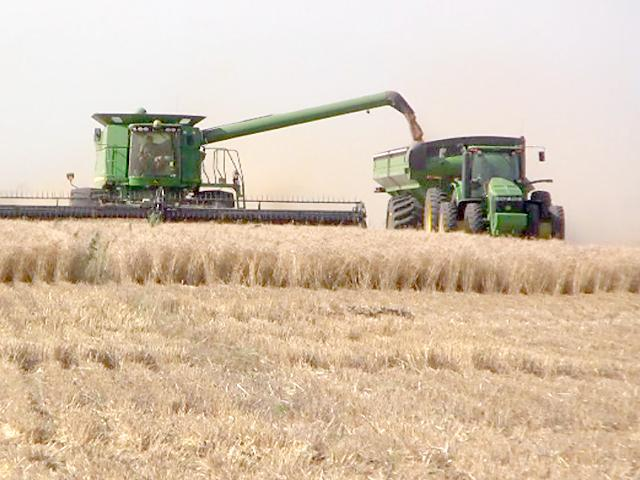 Senators are making the case to USDA that wheat farmers have taken enough losses in income because of COVID-19 and should be eligible for aid under CARES Act funding. USDA has paid out about $9.4 billion in disaster aid, but only about 30% of wheat production is eligible for aid. (DTN file photo)