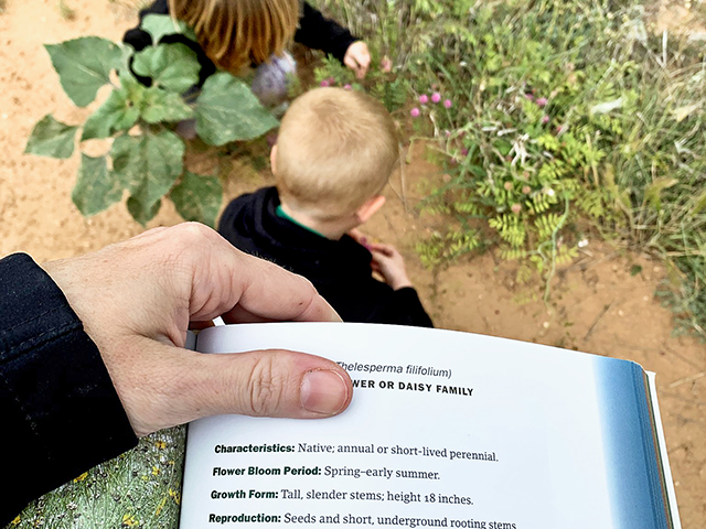 Blogger Tiffany Dowell Lashmet and her two pre-schoolers have spent hours walking around the pastures with a rangeland plant identification book in hand, finding all kinds of different forbs and grasses to identify. (DTN/Progressive Farmer photo by Tiffany Dowell Lashmet)