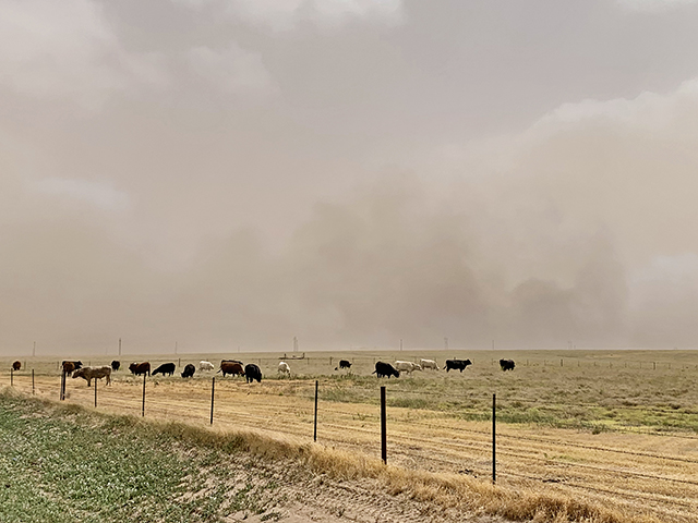 In the end, some 2,400 acres of rangeland had burned. (DTN/Progressive Farmer photo by Tiffany Dowell Lashmet)