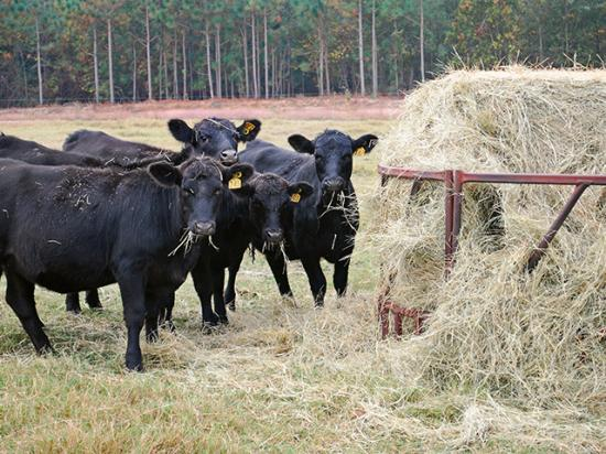 Cow-calf producers should test hay and know their livestock nutritional needs before buying hay for feed. (DTN/Progressive Farmer file photo by Boyd Kidwell)