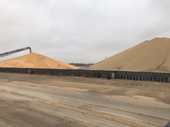 As corn and soybean harvest started early, and in some cases ran side-by-side this year, elevators like this one in Overton, Nebraska, had to pile the two crops close together while waiting for transportation to ship one or the other. (Photo courtesy of Don Batie)