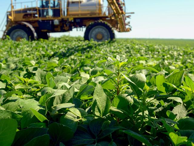 Post-Emergence Dicamba Herbicide
