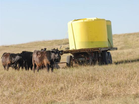 Cow-calf producers in the Northern Plains have seen drought limit forage production, which has led them to reduce their herd size. Some producers have even had to haul water to pastures and rangeland. (DTN photo by Jim Patrico)