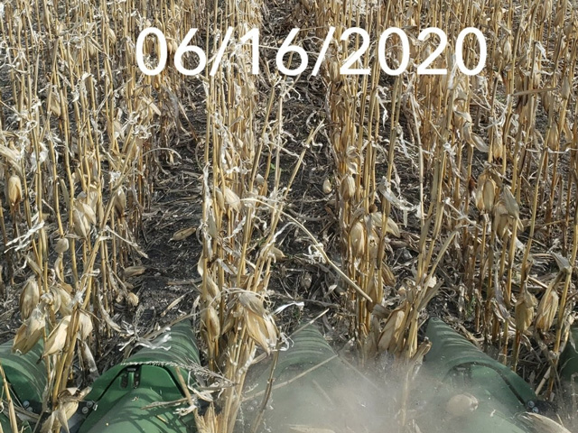 According to Shaun McCoy, Larimore, North Dakota, most of the 2019 corn harvest (up to 90%) in his area of eastern North Dakota happened in March-April 2020. Quite a few farms tried harvesting some corn before winter really hit with a pretty big storm. He added that most farmers realized it wasn't worth harvesting since the test weight was sub-50 lbs and moisture was almost mid-20s. This picture sums up one of the setbacks many North Dakota farmers had this past spring when planting season arrived. (Photo by Shaun McCoy)