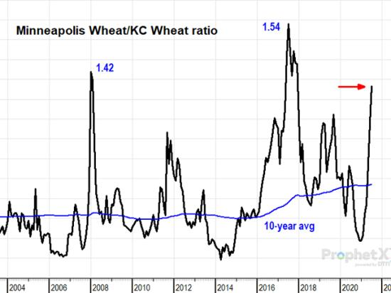 One way of looking at Minneapolis wheat prices is to compare them with KC wheat prices. Minneapolis wheat is currently 1.38 times the price of KC wheat, a much higher than normal ratio, but not nearly as high as the 1.54 ratio reached in the lesser drought of 2017. (DTN ProphetX chart by Todd Hultman)