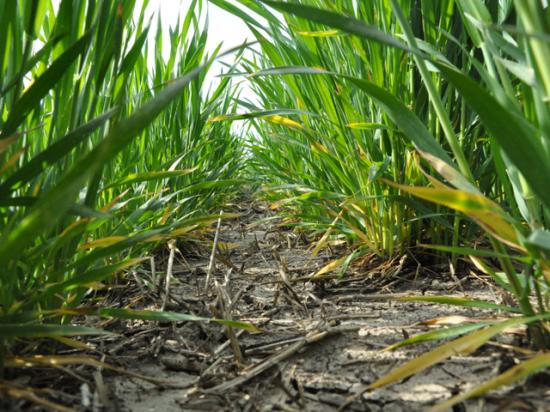 USDA on Friday estimated winter wheat seedings at 32.61 million acres. (DTN file photo)