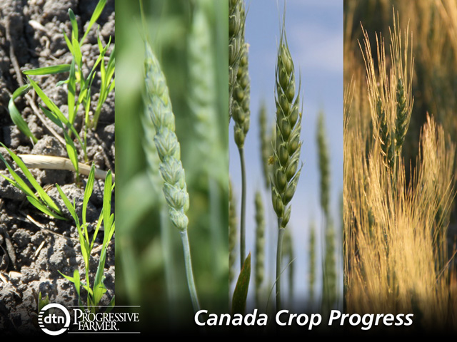 Above normal temperatures throughout most of the region continue to advance crops. While rain fell in much of the province this week, areas in Central and Western Manitoba would benefit from rain.