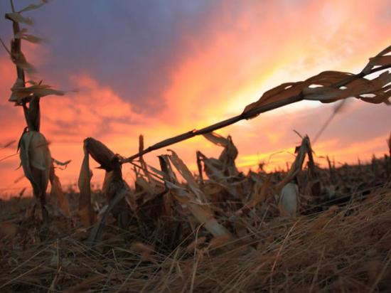 As the sun sets on 2019, DTN's Agronomy Advisers reflected on what they've learned from this historically challenging season. (DTN photo by Elaine Shein)