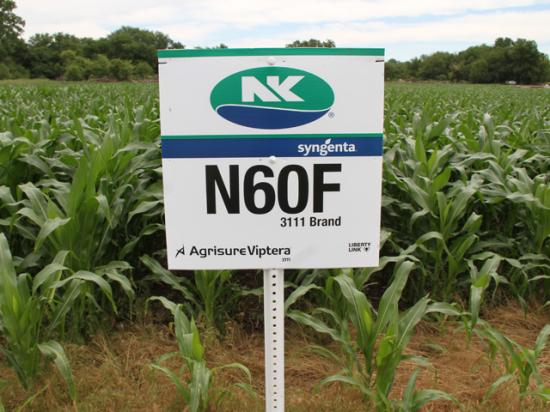 A federal court denied Syngenta's request for appeal on the ongoing Viptera corn lawsuits. (DTN file photo)