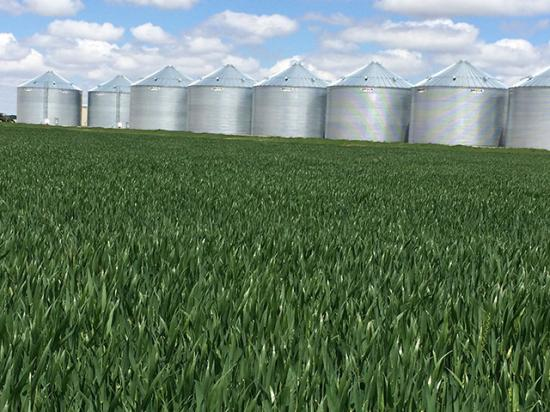 The 2016 wheat crop was a bin buster and wheat scouts pulled the highest ever yield estimate for the Hard Red Winter Wheat Tour. What they will find next week is likely a smaller crop that may have suffered some damage from cold temperatures. (DTN photo by Pamela Smith)