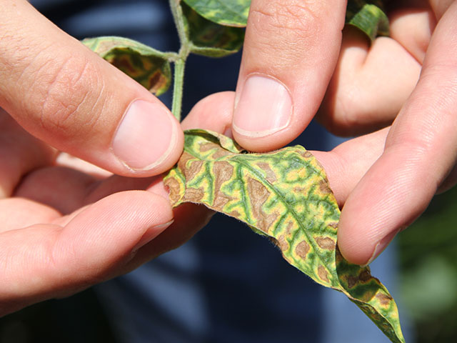 If you think you know everything about managing SDS, think again -- research is changing recommendations with each passing year. (DTN photo by Pamela Smith)